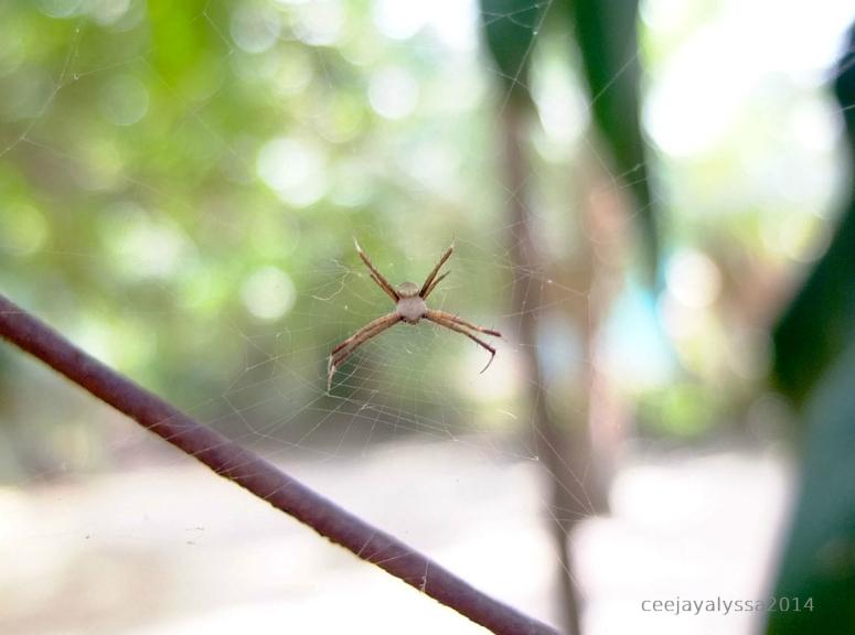 spiderfinal